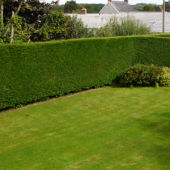 hedge trim 5