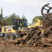 land-clearing4