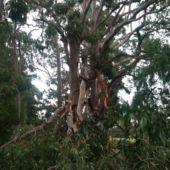 storm damage 1