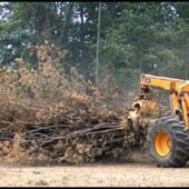 landclearing6