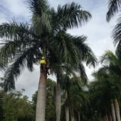 palm cleaning 3