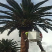 palm cleaning 4